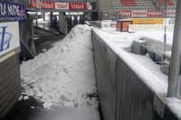 Picot sous la neige - Photo n°7